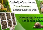 Oportunidad de negocio con la helicicultura